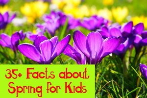 facts about spring for kids