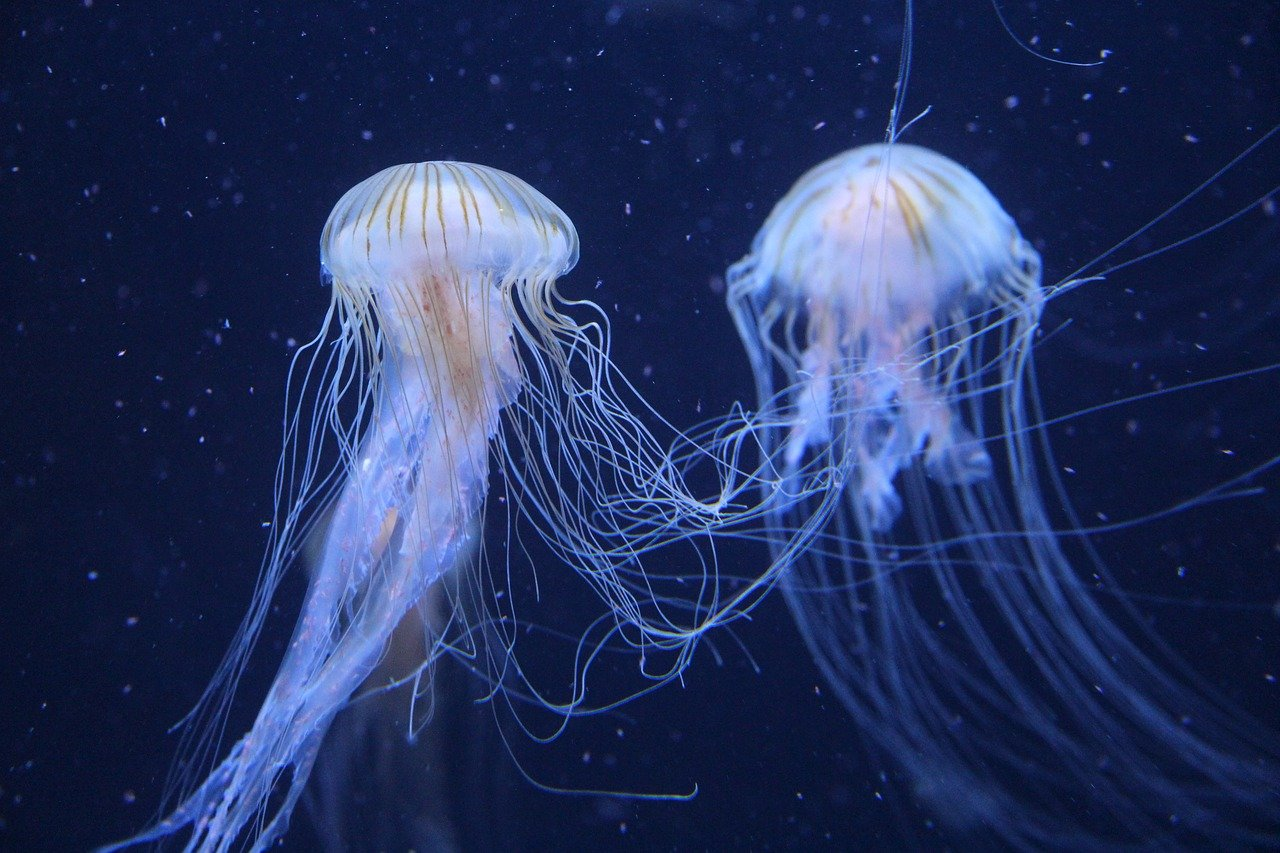 Jellyfish Facts for Kids