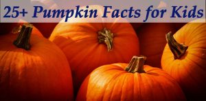 Pumpkin Facts for Kids
