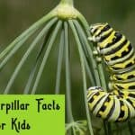 25 Surprising Facts about Caterpillar Kids Must Learn