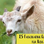 25 Fascinating Goat Facts for Kids