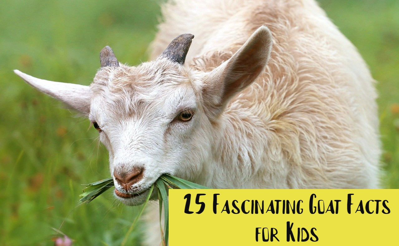 Goat Facts for Kids