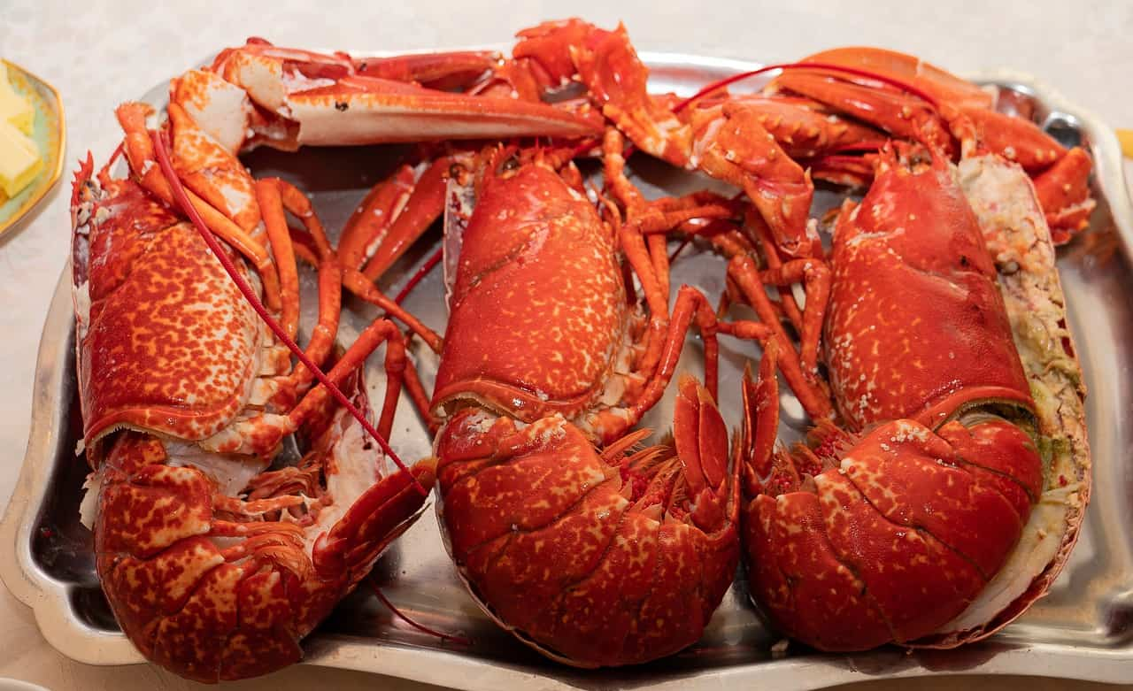 Lobster Facts for Kids